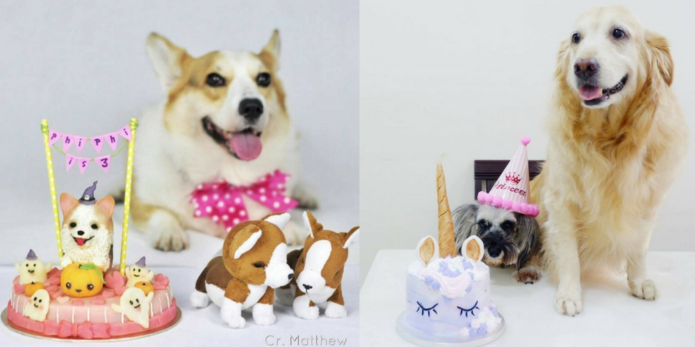 Your Furkids Deserve The Best Bday Cake EVER So Here Are 4 Places In KL To Get Em
